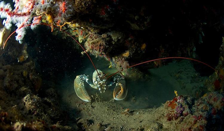 spiro-sub-15