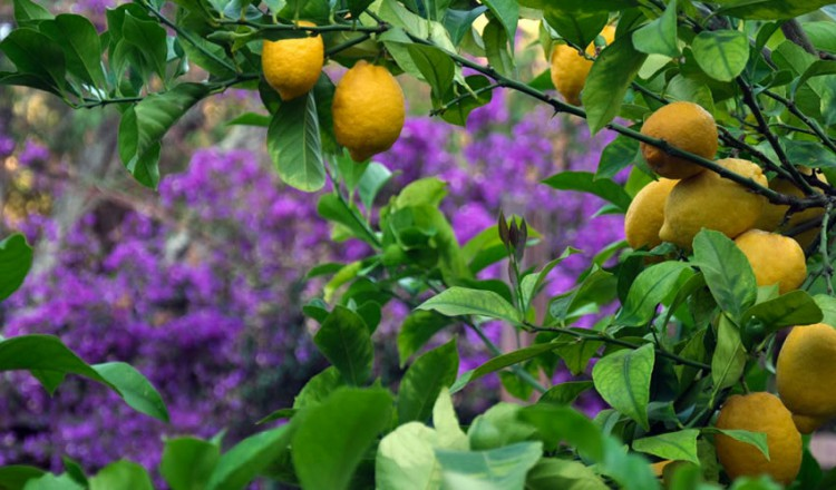 villa-dei-limoni-04