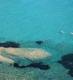 Mare dell'Elba