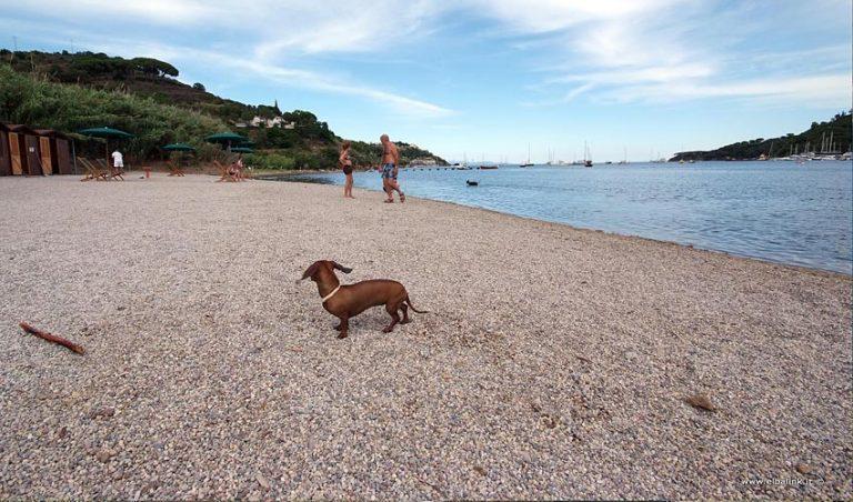 Spiaggia di Mola, Elba